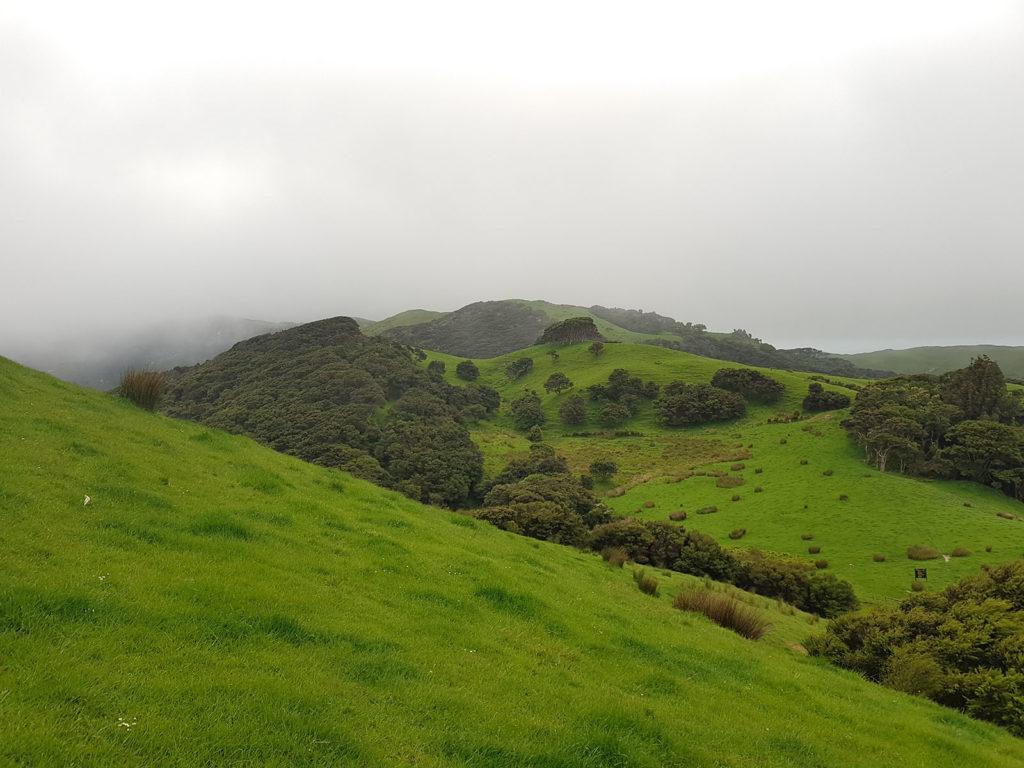 Grüne Wiesen Neuseeland Golden Bay View Point