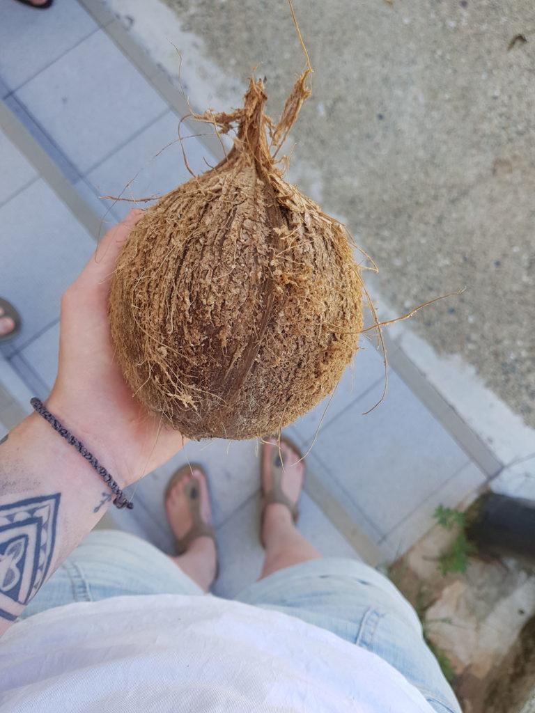 Kokosnuss Fiji