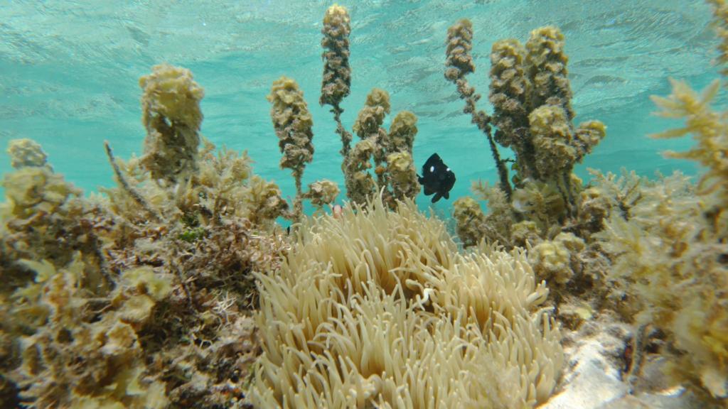 Fisch zwischen Korallen beim Schnorcheln in Fiji