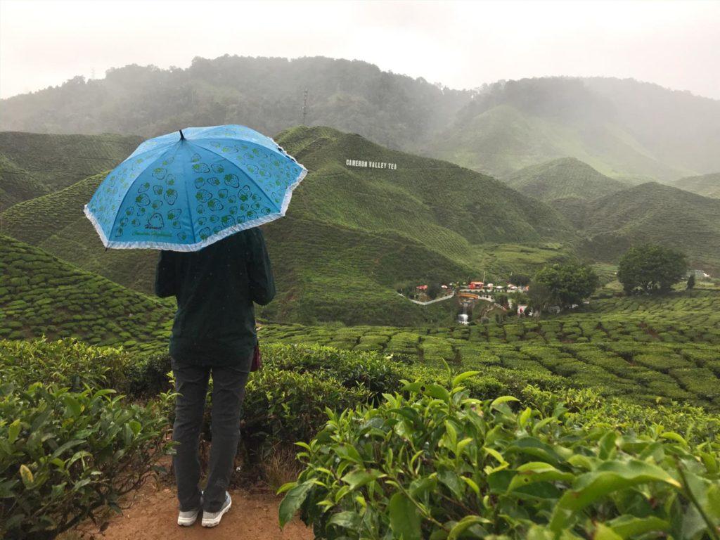Frau mit Regenschirm in Teeplantagen