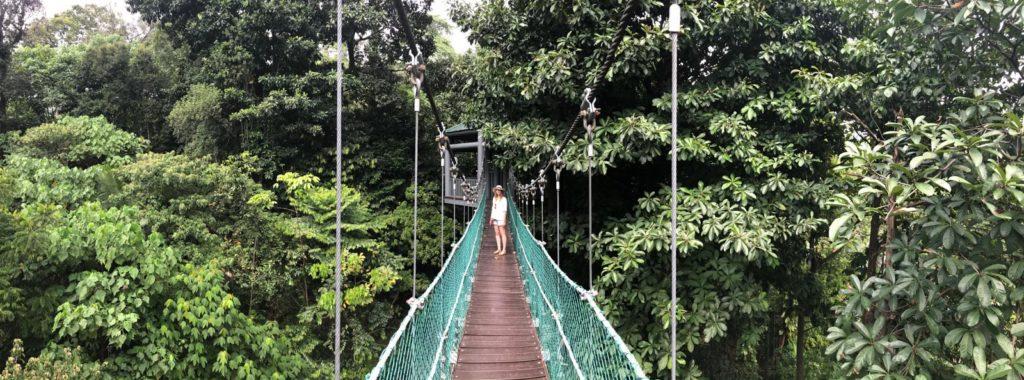 Canopy Walk in Eco Forest mit Frau in Kuala Lumpur